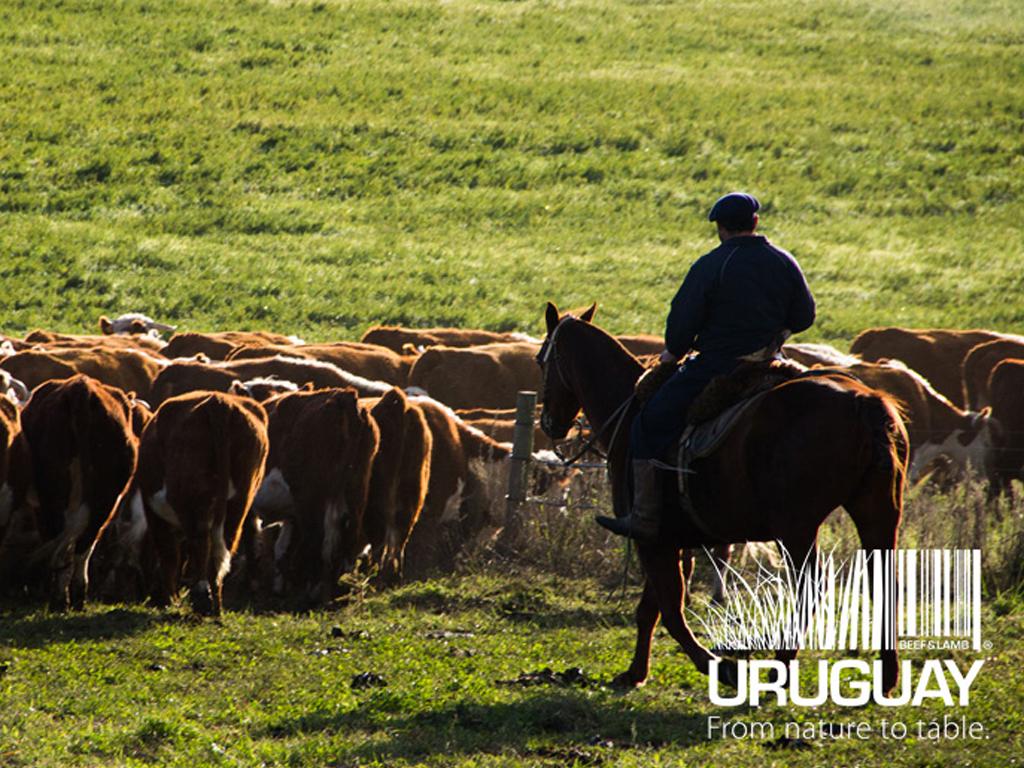 Nuevo sitio web para INAC: Uruguayan Meats (Carnes del Uruguay)